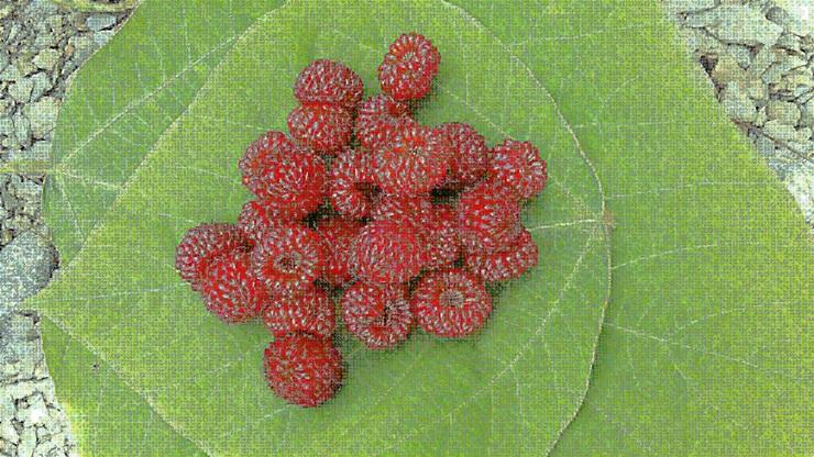 딸기1.jpg
